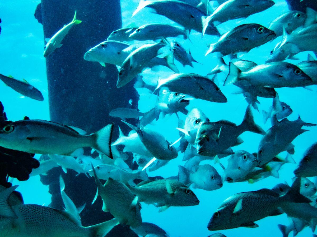 Rolex Sea-Dweller Deepsea SCUBA Diving D-Blue Dial James Cameron